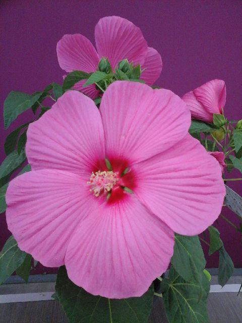 Plante et Fleur de Juillet | Fleuriste Sarlat | Fleurs ...