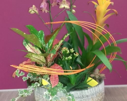 Composition de plantes orangé